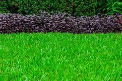Sikt av grönt gräs Royaltyfri Fotografi