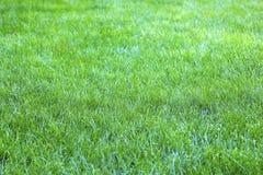 Sikt av grönt gräs för ny vår Royaltyfri Fotografi