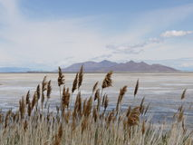 Sikt av Great Salt Lake, Utah Fotografering för Bildbyråer