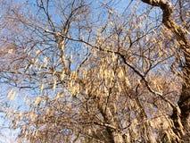 sikt av hängande hängear på träd i den härliga våren Royaltyfri Foto