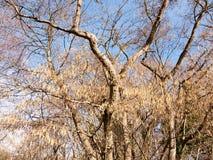 sikt av hängande hängear på träd i den härliga våren Arkivbilder