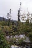 Sikt av höga Tatra Royaltyfri Bild