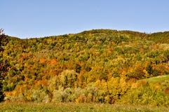 Sikt av höstlandskapet med härliga färger Royaltyfria Foton