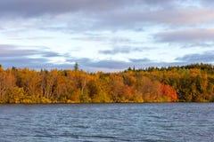 Sikt av höstskogen och yttersidan av sjön Härligt höstlandskap med vatten och ljus vegetation iceland Europ fotografering för bildbyråer
