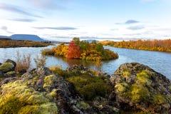 Sikt av höstskogen och yttersidan av sjön Härligt höstlandskap med vatten och ljus vegetation iceland Europ royaltyfria bilder