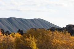 Sikt av höstskogen och yttersidan av sjön Härligt höstlandskap med vatten och ljus vegetation iceland Europ arkivbilder