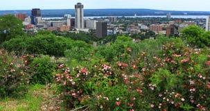 Sikt av Hamilton, Kanada, centrum med blommor i förgrund 4K stock video