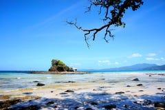 Sikt av havet med ett träd Fotografering för Bildbyråer