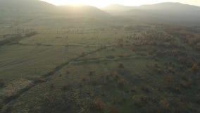 Sikt av inställningssolen över en härlig grön skog arkivfilmer