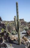 Sikt av Jardin de Kaktus, Lanzarote - 53324151 Royaltyfria Bilder