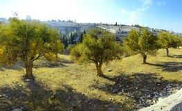 Sikt av Jerusalem från monteringen av olivgrön royaltyfri fotografi