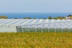 Sikt av jordbruks- växthus Royaltyfria Foton