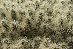 Sikt av kaktuns Arkivfoto