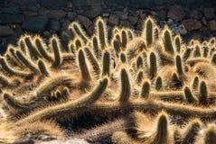 Sikt av kaktusträdgården Royaltyfri Foto