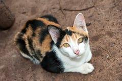Sikt av katten på brunt arkivfoto