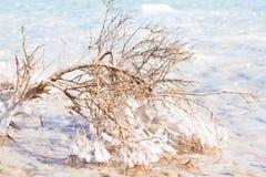 Sikt av kustlinjen för dött hav Royaltyfria Foton