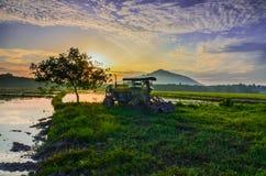 Sikt av landskapet för risfältfält Royaltyfri Bild