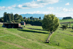 Sikt av lantgårdland på Ohaupo, Waikato, Nya Zeeland NZ NZL som ser in mot monteringen Mt Titiraupenga Royaltyfri Bild