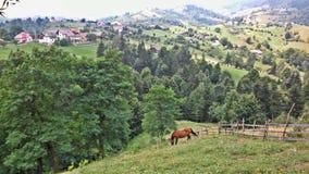 Sikt av Magura Rumänien Arkivbild