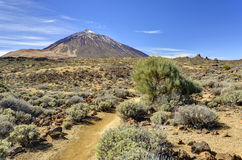 Sikt av monteringen Teide Royaltyfri Foto