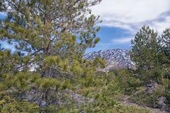 Sikt av Mount Etna på en höjd av 1.800 meter med snöresi Arkivfoto