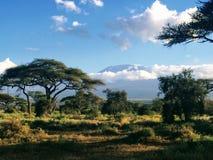 Sikt av Mount Kilimanjaro från den Amboseli nationalparken i Kenya Arkivfoton