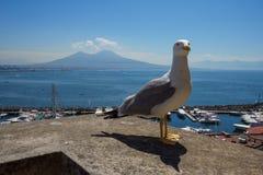 Sikt av Mount Vesuvius från för Ovo för Castel dell` ståenden Seagull Royaltyfri Fotografi