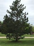 Sikt av nordlig vegetation i Green Bayen, Wisconsin, USA Arkivfoto