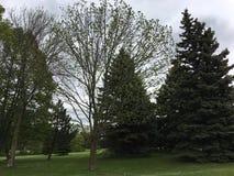 Sikt av nordlig vegetation i Green Bayen, Wisconsin, USA Arkivbild