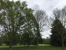 Sikt av nordlig vegetation i Green Bayen, Wisconsin, USA Royaltyfria Bilder