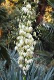 Sikt av palmliljablommor royaltyfria foton