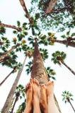 Sikt av palmträd från motsatt himmel med två par arkivbild