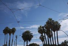 Sikt av palmträd och elektriska kablar arkivfoton