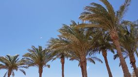 Sikt av palmtr?d stock video