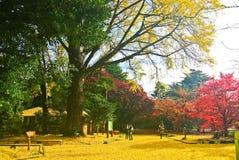 Sikt av parkera i höst i Tokyo, Japan Arkivbilder