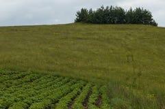 Sikt av potatis-fältet, gläntan och hurst på en överkant på det Plana berget Arkivfoton