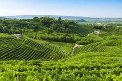 Sikt av Prosecco vingårdar från Valdobbiadene, Italien under summ arkivfoto