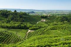 Sikt av Prosecco vingårdar från Valdobbiadene, Italien under summ arkivbild