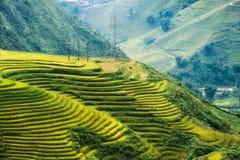 Sikt av risfält terrasserat glöda på berget royaltyfri bild