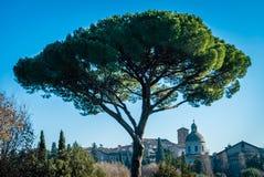 Sikt av Rome i vintern Royaltyfri Fotografi
