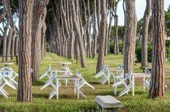 Sikt av sörja-träd stammar och kafétabeller, Pineto Royaltyfri Foto