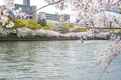 Sikt av sakura (körsbärsröd blomning) träd vid floden från Sakurano Royaltyfria Foton