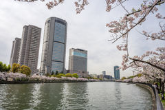 Sikt av sakura träd och skyskrapor vid floden från Sakuranom Arkivfoton