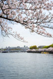 Sikt av sakura träd vid floden och bron från Sakuranomi Fotografering för Bildbyråer