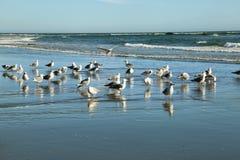 Sikt av seagulls i den andra stranden Royaltyfri Foto