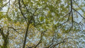 sikt av sidor och filialer av ett träd royaltyfri bild