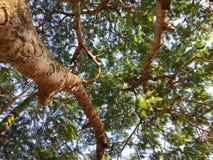 sikt av sidor och filialer av ett träd royaltyfri foto