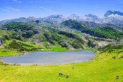 Sikt av sjön Ercina i sommar Royaltyfria Bilder