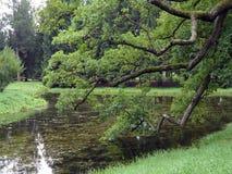 Sikt av sjön till och med filialer av den gamla eken på molniga dagar Damm med gräs och blommavatten royaltyfri fotografi
