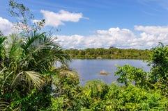 Sikt av sjön i amasonrainforesten, Manaos, Brasilien Arkivfoto